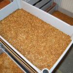 Meelworm mag in EU worden gebruikt als voedsel