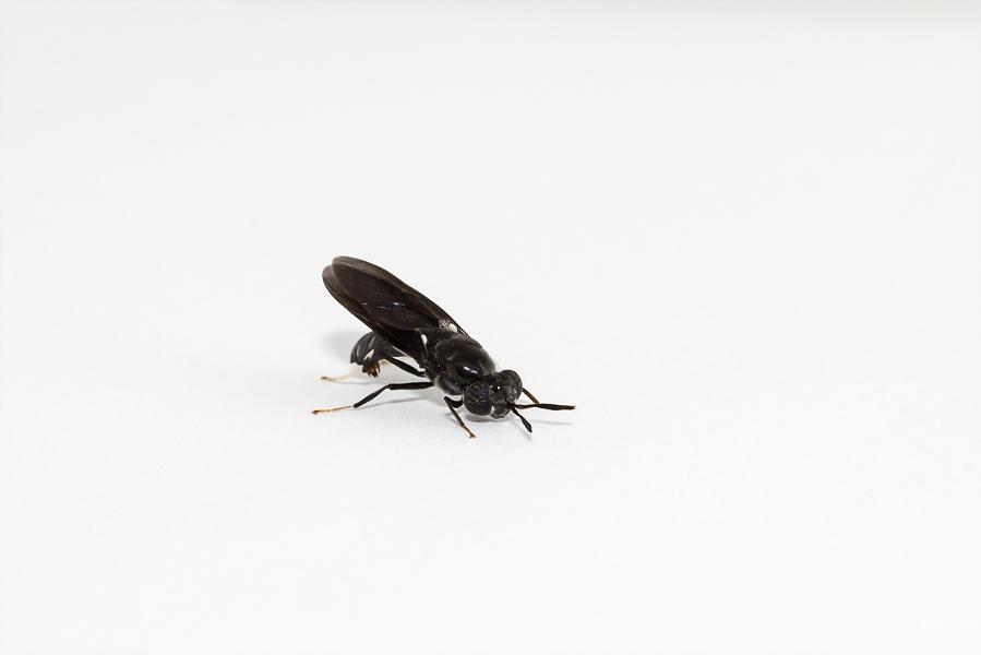 Artikel insectenkweek door dierenwelzijnsweb